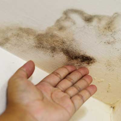 Orange County Mold Removal Services